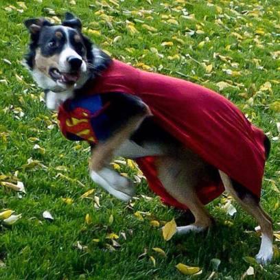 super dog par Tricia McDonald