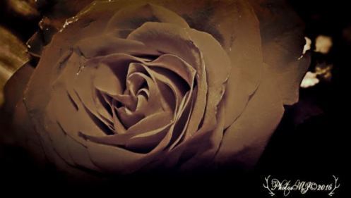 photosmj-copyright2016-fleur-rose