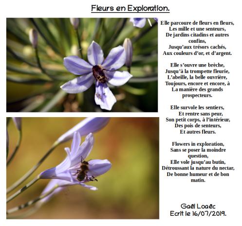 Fleurs en Exploration